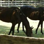 52 Free Horses That Do NOT Need Homes