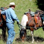 Is Horse Ownership Right for Me (And My Wallet)?