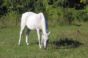 Horse Sunburn – Prevention and Treatment
