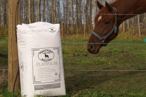 Which Kind of Stall Bedding is Right for My Horse?