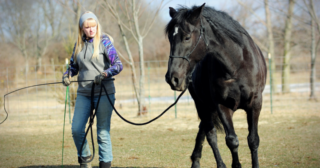 first-time-horse-owners