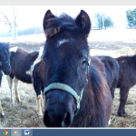 Unwanted horses…YOU are already part of the solution.