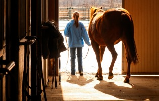 Clean Sweep: 7 Tips To Get Your Horse, Barn & YOU Ready To Ride