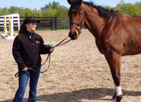 Retired Racehorse Project Seeks 500 Trainers for $100,000 Thoroughbred Makeover