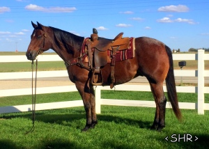 LB OTOES MAGIC - '09 AQHA Bay Roan Gelding