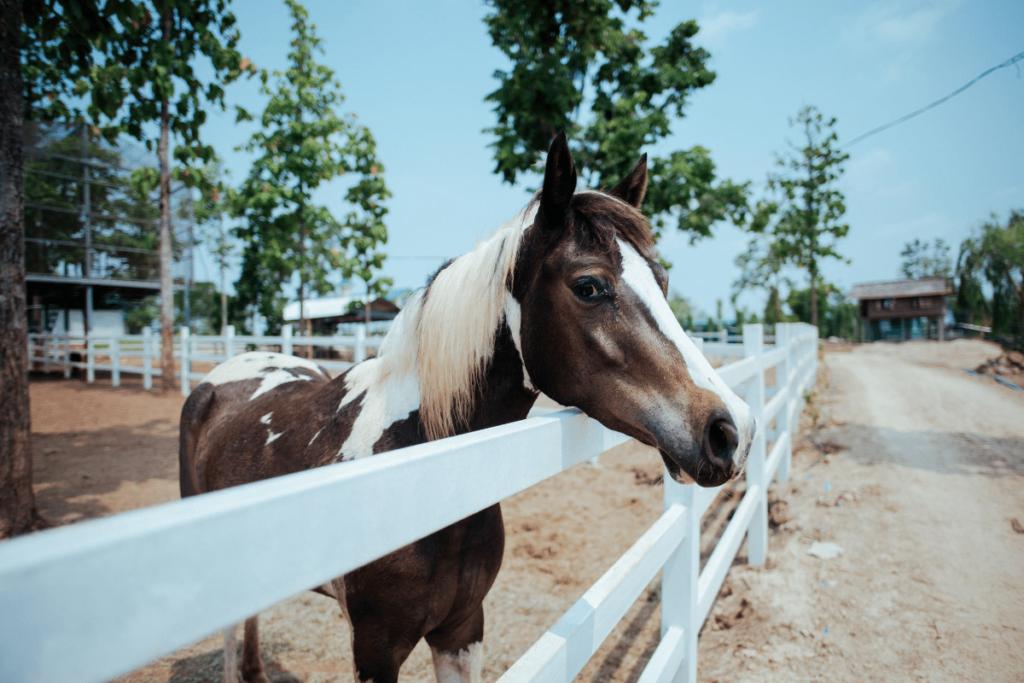 barn-sour-horse