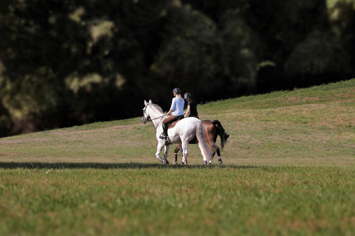 barn sour horse