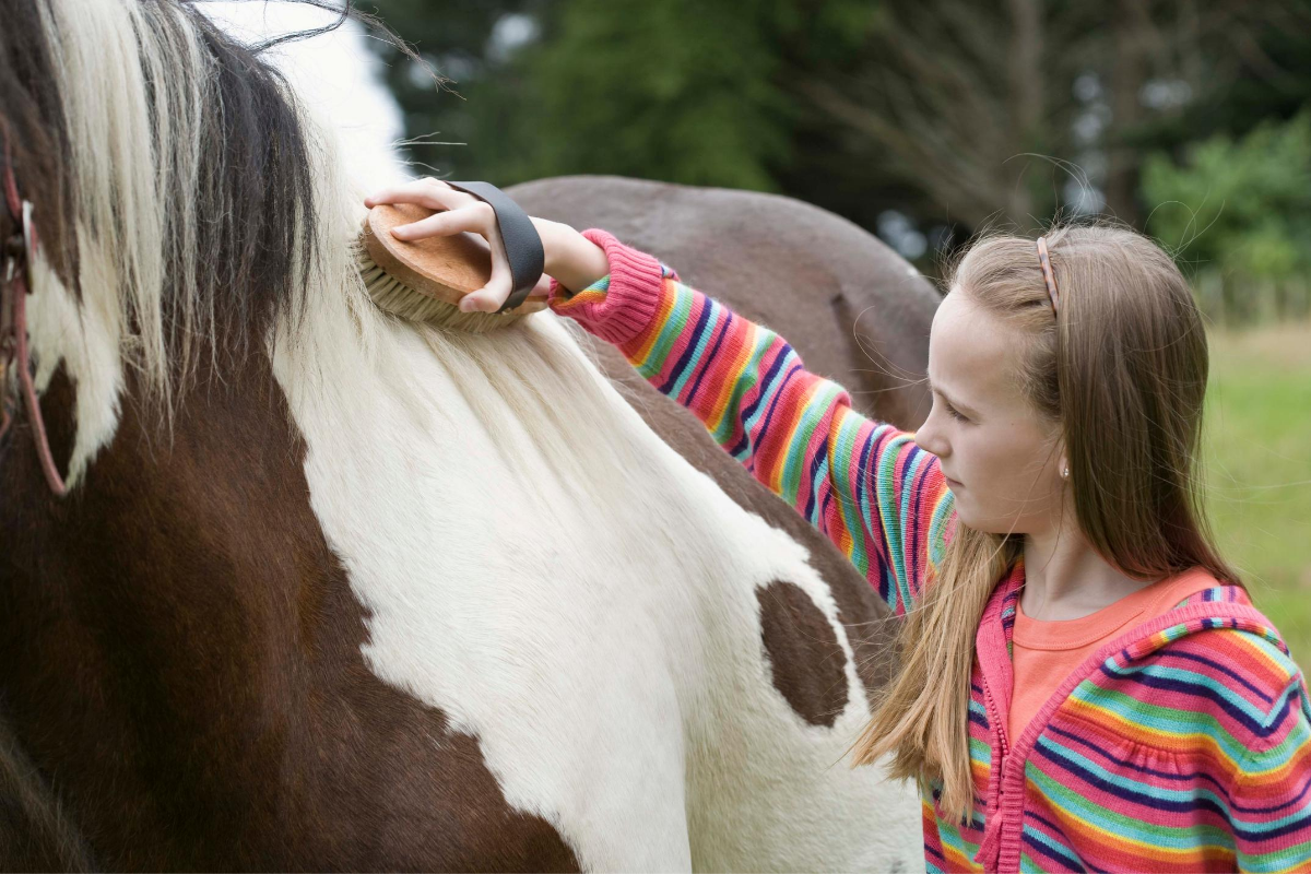 buy-a-horse-for-your-child