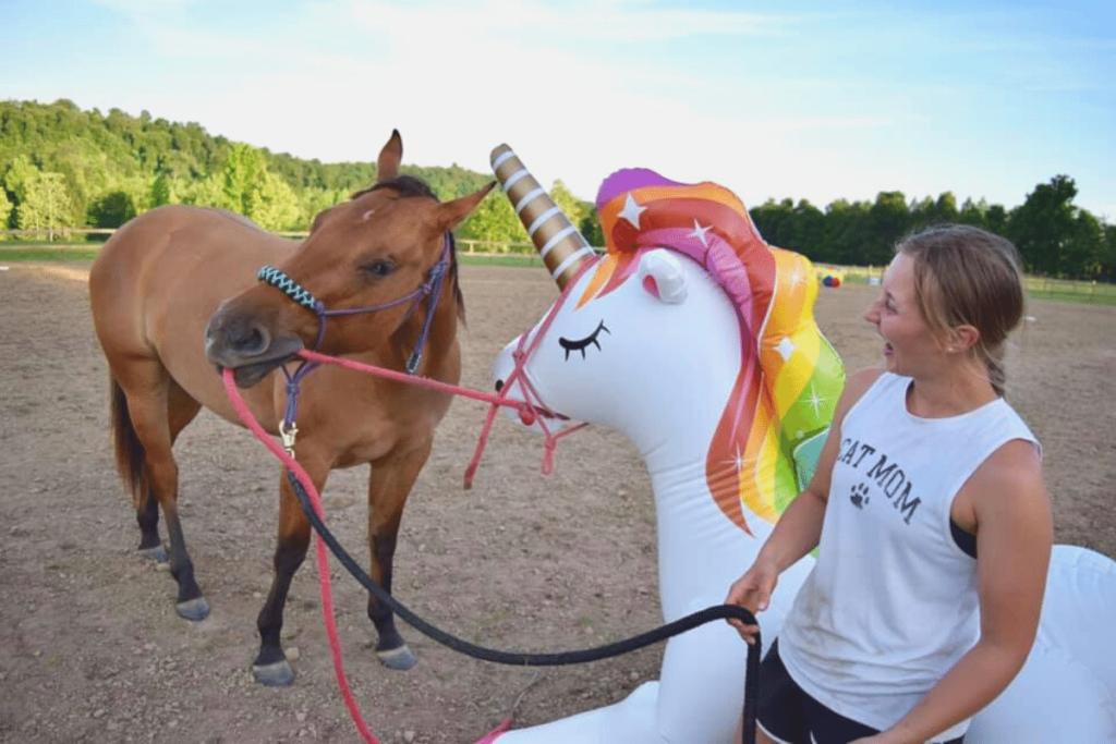 desensitize-your-horse