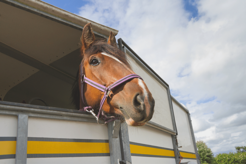 moving-your-horse-home