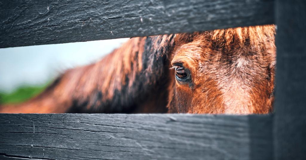 horse-fencing